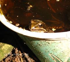 frog tub 2