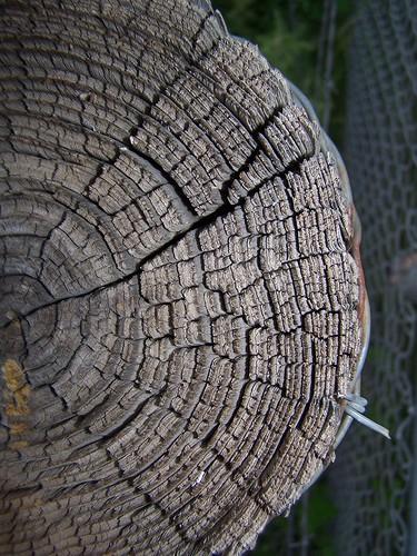 Old Wood...