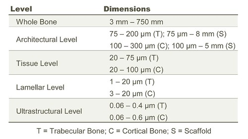 Bone Heirarchical Levels