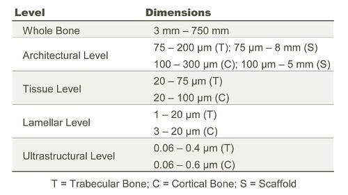 Bone Heirarchical Levels