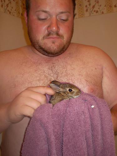 bunny-web-2