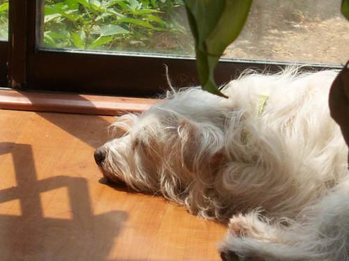 A tired Duff