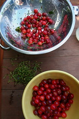 pitting sour cherries