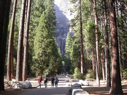 樹林的盡處就是優山美地瀑布