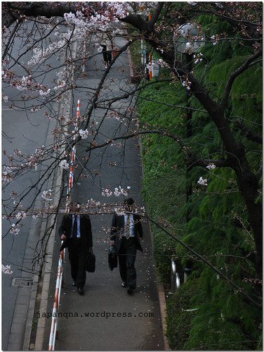 Sakura with two unsuspecting salarymen