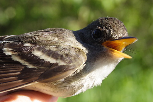 I'll open my beak, but I will not sing!