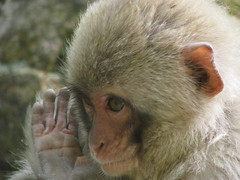 93 - Monkey Salute - 20080618
