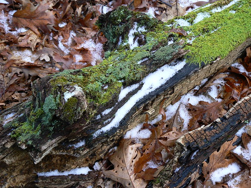 Bear Cliffs - Four Seasons, One Log