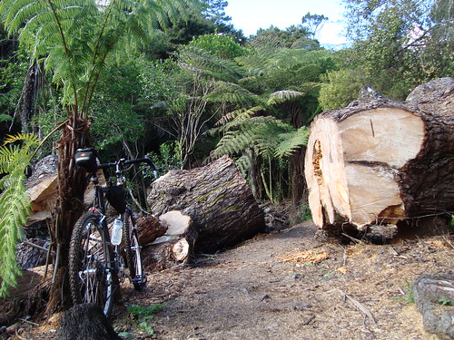 Unsworth Reserve Tree Felling
