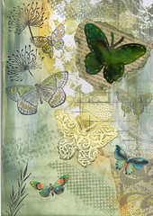 Butterfly page 1