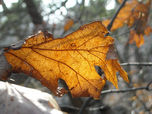 Sunlight and Leaf 2