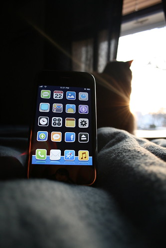 Phone & Cat