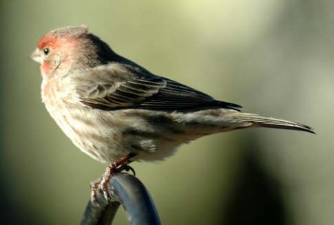 Bird in backyard