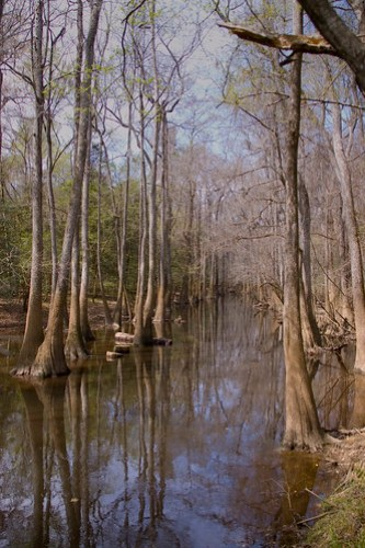 Congaree Swamp 2