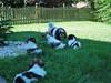 max puppies