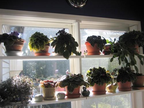 Plant Kitchen Window