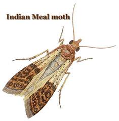 20080616-Mothra Attacks