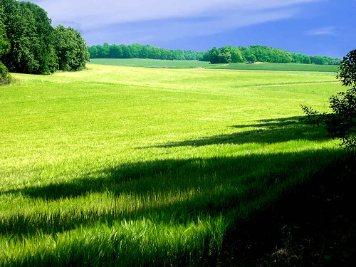 Landscape - Green View, Halla