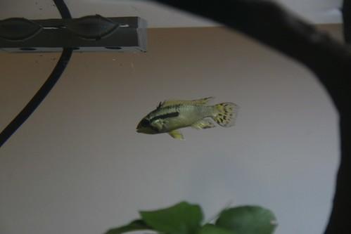 A New Tank (5/5)