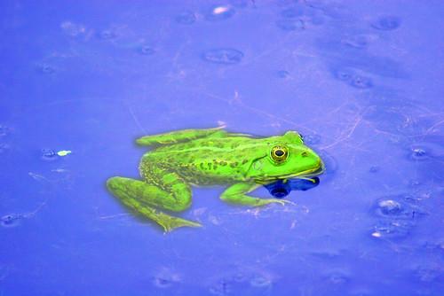 Gren Toad