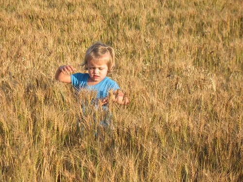 swimming through the wheat