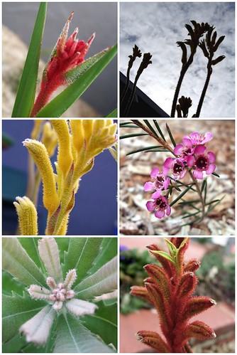 nativeflowers