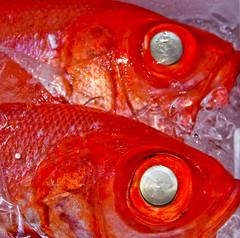 Red Fish Tsukiji Fish Market Tokyo