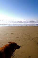 Dog on Strand