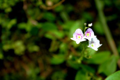 Teeny Flower