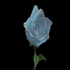 Rose Hunt Special Rose