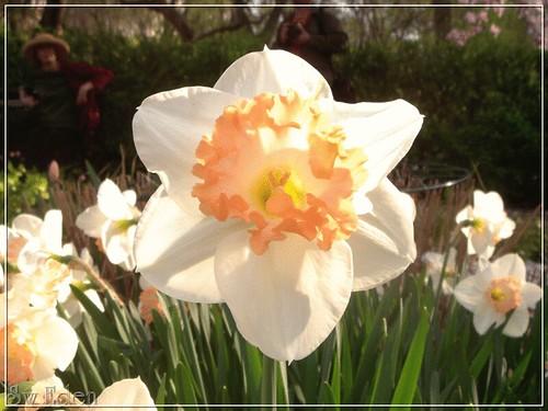 White - orange Flower