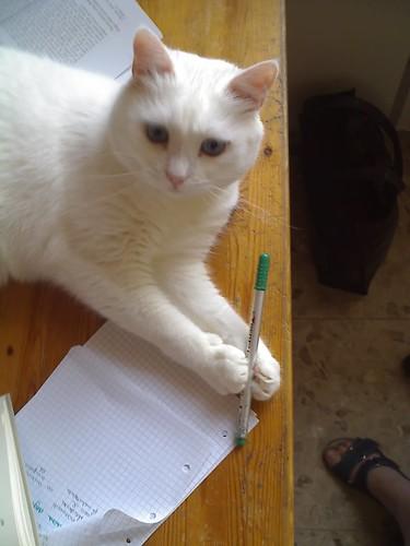 Holding paw: Kia storm =(^.^)= PetoMarmitta & friends / Chiara