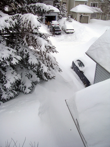 Front Yard from Above