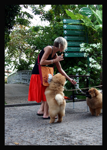 Chow puppies on our visit to see Ekarat in Thailand