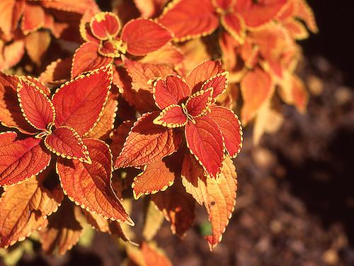 Leaf Abstract. (Kodak Ektachrome E100VS. Nikon F100. Epson V500.)