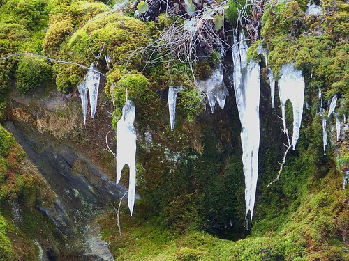 Moss and ice