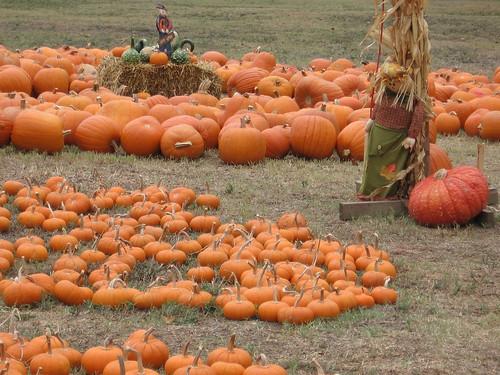 Pumpkin Patch Extraordinaire