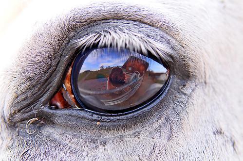 """Une petite sélection photos sur """"L'oeil"""" - BonPlanPhoto"""