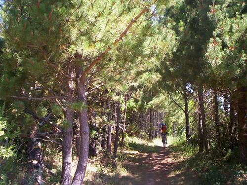 Inverness Trail.JPG