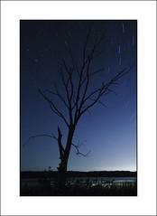 Banner Marsh Stars 1