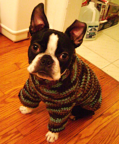 Iggy's Dog Sweater Pattern/Tutorial (1/6)
