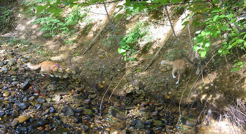 20080914 - cats visit our creek - 168-6816-diptych-168-6817 - Oranjello - at the creek - please click through to leave a comment on FlickR