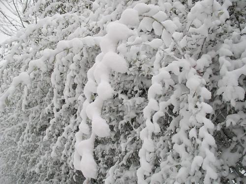 Snow Day 019