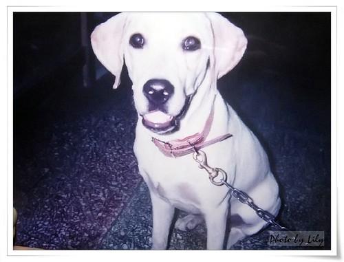 嘟嘟的幼犬時期。