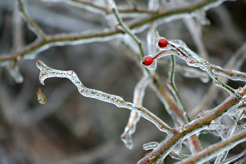 icyBerries