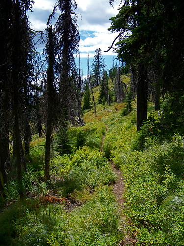 Reservation Divide trail No. 98