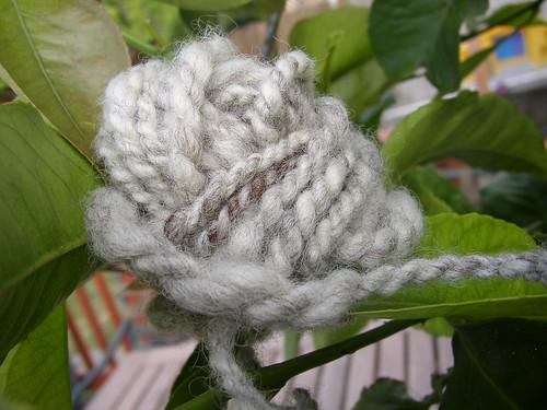 wool white oatmeal lemon