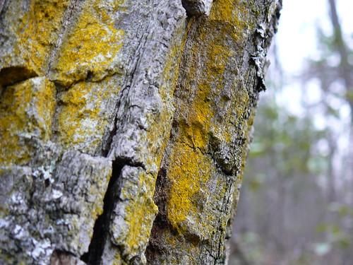 Sinking Creek Mountain - Yellow Fungi