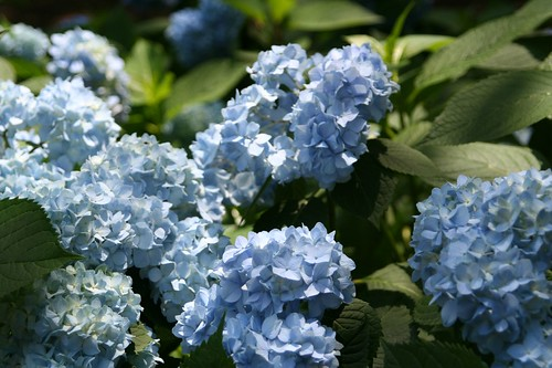 union square flowers