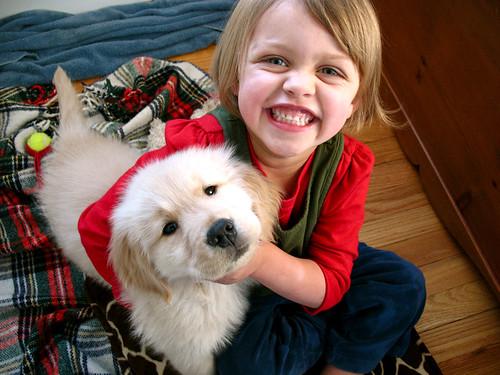 christmas dogs - 3
